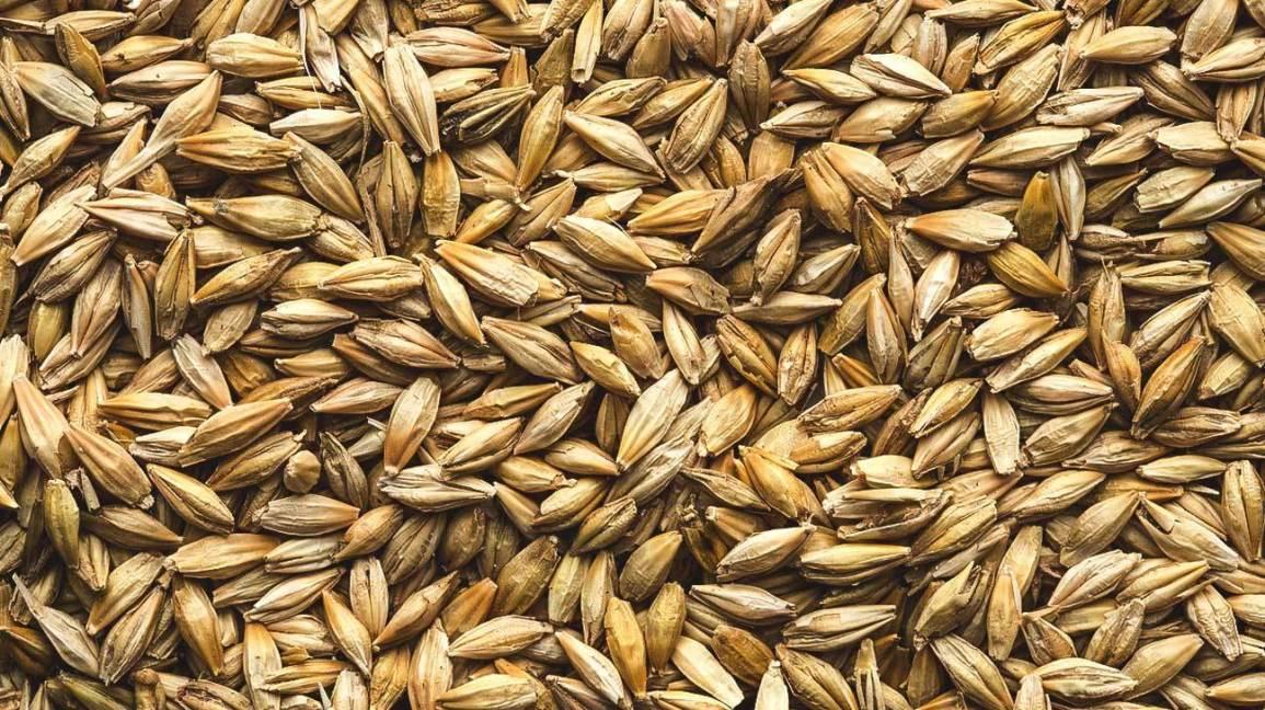 Barley is not Gluten-free