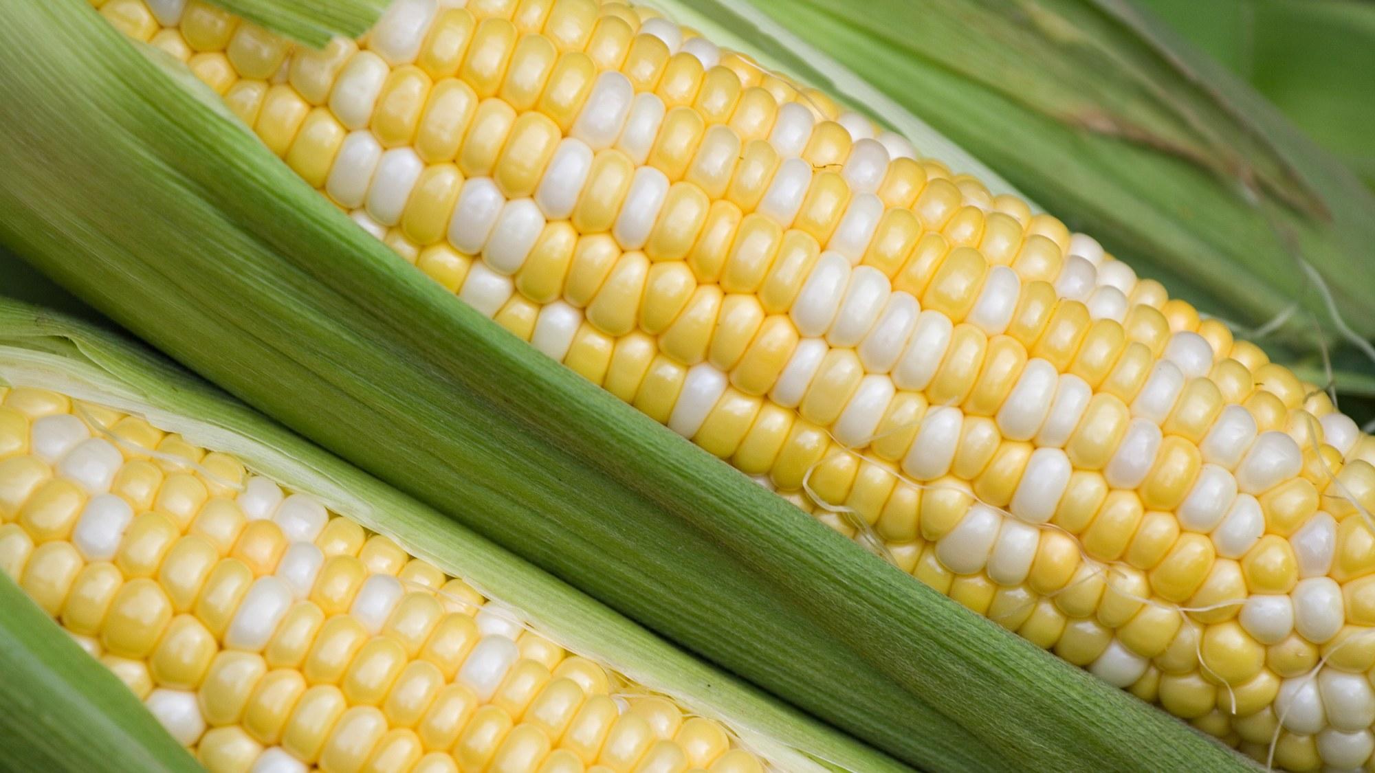 Corn is Gluten-Free