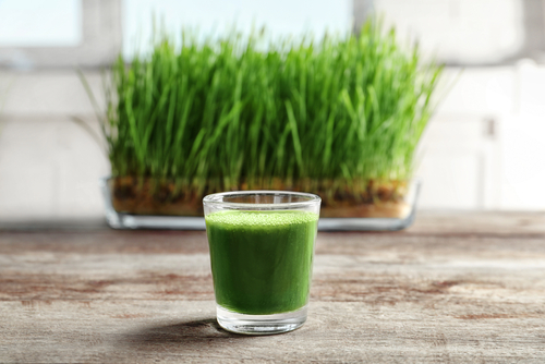 Wheatgrass is Gluten-Free